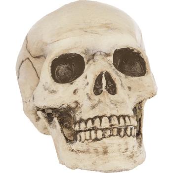 Cráneo de Plástico con Boca Articulada