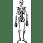 Decoracion-de-Esqueleto-Party-City